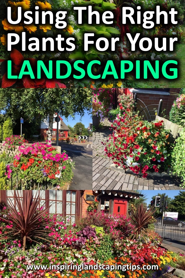 Landscaping Plants