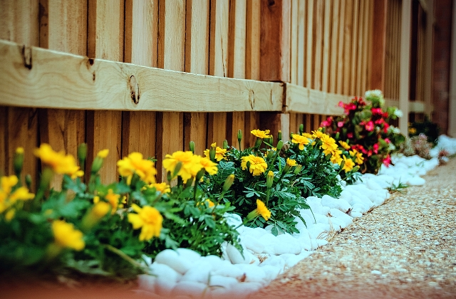 What is the Best Plant for Flower Beds?