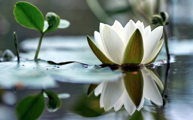 Landscaping Pond