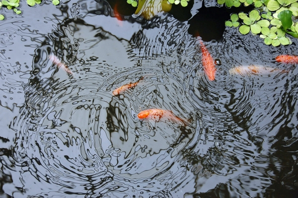What Can I Put Around My Pond?