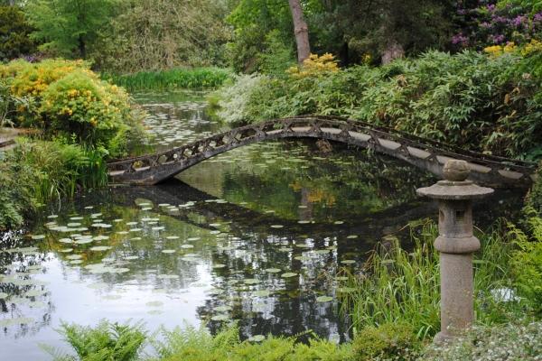 Is Garden Ponds a Good Idea?