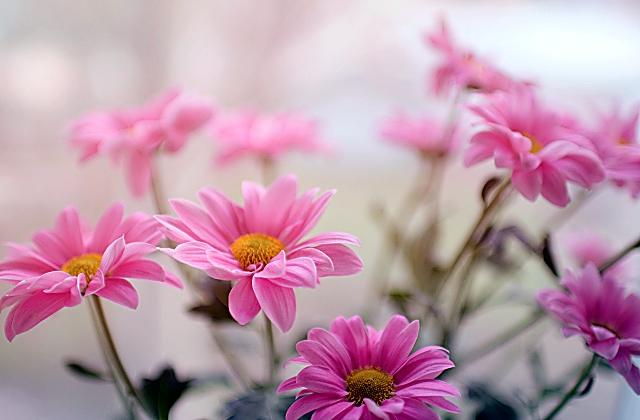How Do You Plant a Beautiful Flower Garden?
